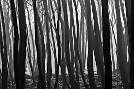 haskins photography black and white landscape prints for