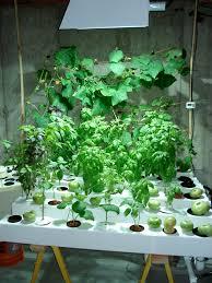 indoor hydroponic garden under hid metal halide plant grow light