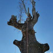 Landscaping Evansville In by American Tree Experts U0026 Landscaping 13 Photos Tree Services