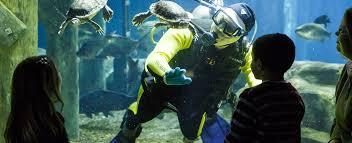 Tennessee snorkeling images Newsroom tennessee aquarium jpg