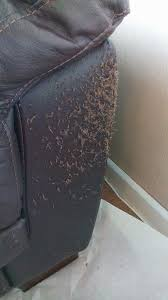 How To Fix Scratches On Leather Sofa Cats Can Create Two Differing Types Of Cat Scratches On Leather