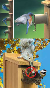 wild birds unlimited common bird house problems