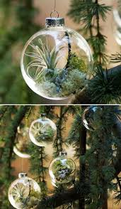 Decorate Christmas Tree All Year by Diy Air Plant Ornaments This Is So Cool I Could Leave These