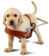 guide dogs for the blind san rafael ca www guidedogs com