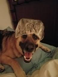 Dog In Shower by Shower Caps On Dogs Is My New Favorite Thing Album On Imgur