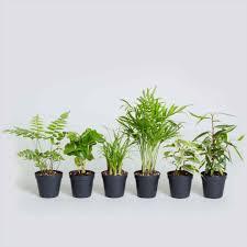 tall house plants low light darxxidecom