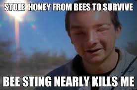 Meme Bear Grylls - stole honey from bees to survive bee sting nearly kills me bear