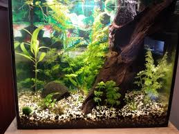 10 gallon planted tank led lighting 10 gallon fish tank setup and other required information