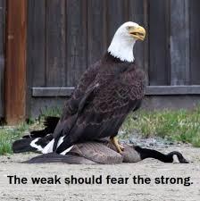 Freedom Meme - laughs in freedom meme by alliesend memedroid