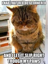 Cat Problems Meme - first world cat problems fun cat pictures