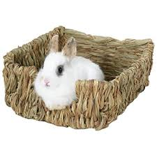 rabbit bedding amazon com