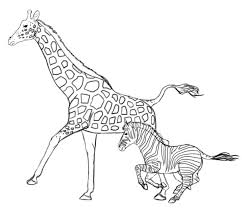 how to draw animals zebras and giraffes