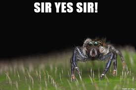 Spider Bro Meme - can you keep the house free of nasty insects spiderbro meme on