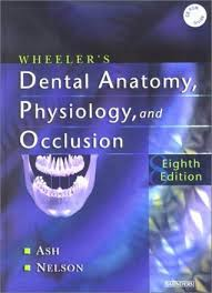 Human Anatomy And Physiology 8th Edition Wheeler U0027s Dental Anatomy Physiology And Occlusion By Major M Ash