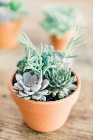 best 25 small indoor plants ideas on pinterest plants indoor