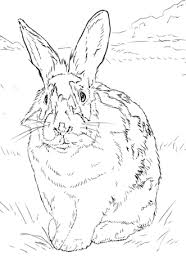 rabbits coloring pages black and white rabbit coloring page free printable coloring pages