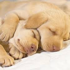 come si dorme bene qui sul dormire