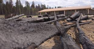 Cedar Landscape Timbers by Timber Kings Tv Stars Work To Save Log Homes From B C Wildfires