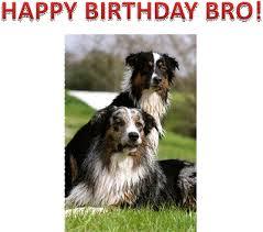 australian shepherd happy birthday dev retired poise aussies u0026 aht