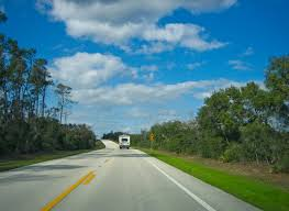 ocala national forest florida black bear scenic byway