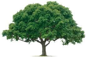 uk wide tree surveys services green tree conultants