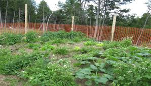 how to start a vegetable garden with companion planting melojak