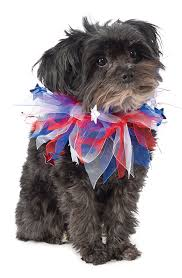 affenpinscher reviews amazon com rubie u0027s patriotic fancy collar dog costume pet supplies