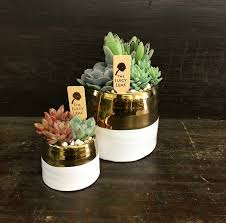 succulent arrangements gold and white succulent set