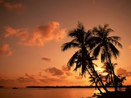 1920x1200px palm tree pictures browser themes desktop photo