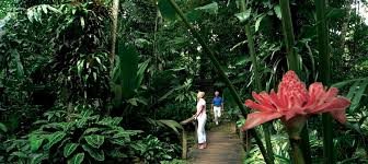 Cairns Botanic Gardens Cairns Botanic Gardens Free Things To Do Cairns Experience Oz
