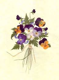 pressed flowers 224 best pressed flower and ideas images on