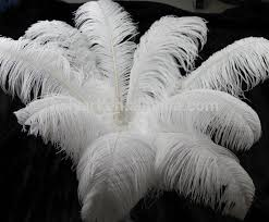 Ostrich Feathers For Centerpieces by Bulk White Ostrich Feathers Bulk White Ostrich Feathers Suppliers