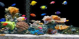 ghiaia per acquari come allestire un acquario le 5 attivit罌 pi羯 importanti best5 it