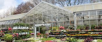 native plant nursery illinois good earth greenhouse gardening plants river forest il