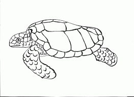 turtle print coloring home