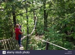 Treetop Canopy Tours by A 70 Feet Above Ground Walk In The Clouds Canopy Tour In The