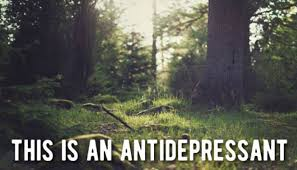Tree Meme - viral meme suggests depression can be cured by going outside