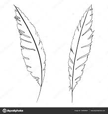 monochrome black and white bird feather vector sketched art