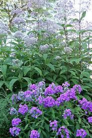 331 best plant combinations images on pinterest flower gardening