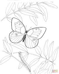 caterpillar and butterfly 3 coloring page free printable