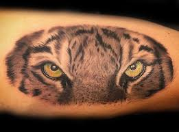 eye of the tiger tiger meaning lifestyle