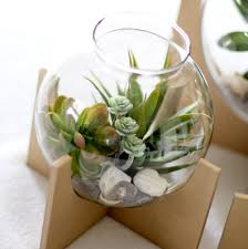 cross based succulent terrarium tutorial reality daydream