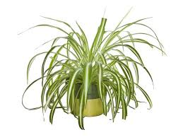 small indoor plants to decorate house photos pics 230296