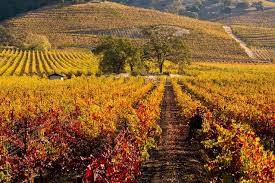 vineyard thanksgiving in napa valley 10 great places to visit for