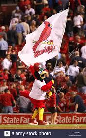 Cardinal Flag St Louis Cardinals Mascot Fredbird Waves A Flag After The