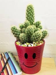 succulent house succulent cactus plant 12cm colourful smiley face emoji ceramic