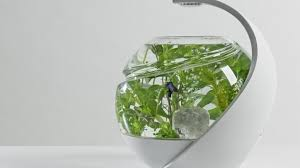 avo the self cleaning tropical fish tank by susan shelley noux