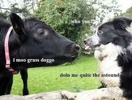 Border Collie Meme - monday meme round up hello marilu