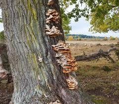 tree care portland or inexpensive tree care