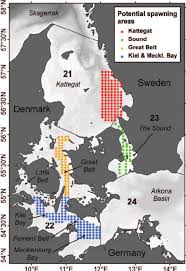 Baltic Sea Map Map Of The Western Baltic Sea With The Sampling Locations For The